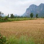 Landschaft. Vang Vieng. Laos — Stockfoto