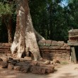 Ta Prohm Temple. Angkor. Cambodia — Stock Photo