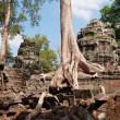 Stock Photo: TProhm Temple. Angkor. Cambodia