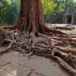 Tree roots in Ta Prohm Temple. Angkor. Cambodia — Stock Photo