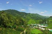 Local village at tea plantation — Stock Photo