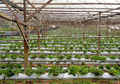 Erdbeer bauernhof — Stockfoto