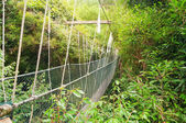 Canopy walkway — Stock Photo