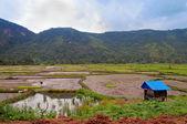 Harau Valley — Stock Photo
