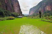 Harau Valley — Stock Photo
