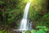 Small waterfall in jungle — Stock Photo