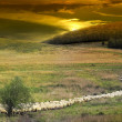 Sunset in the Romanian countryside and flock of sheep. — Stock Photo