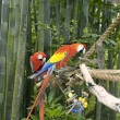 Parrots in captivity in the Animal Kingdom Park, Disney World, Florida, USA. — Stock Photo