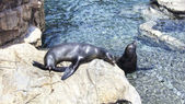 Seals in the zoo. — Stock Photo