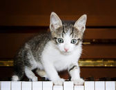Kitten on the keys of the piano. — Stock Photo