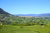 Trentino Italy, apple orchards. — Stock Photo