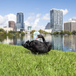 Orlando, Eola Park. — Stock Photo
