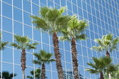 Building with stained glass and palm trees. — Stock Photo