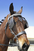 Horse head with bridles. — Stock Photo