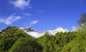 Pejo dalen, italien. — Stockfoto