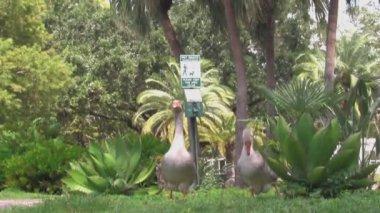 Kazlar eola park, orlando. — Stok video