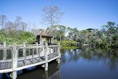 Gatorland in Orlando Florida — Stock Photo