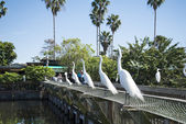 Egrets in Gatorland in Orlando Florida — Stock Photo