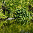 Alligators in habitat — Stock Photo #39517221