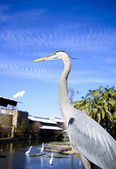 Tricolored heron in the zoo — Stock Photo