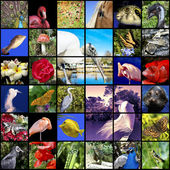 Animals and nature collage — Stock Photo