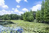Lake Lily, Maitland Florida — Стоковое фото