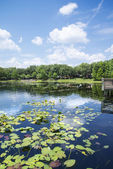 Lago lily en florida maitland — Foto de Stock