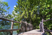 Promenade at Lake Tovel, South Tyrol, Italy — Stock Photo