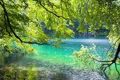 Lake Tovel, South Tyrol, Italy — Stock Photo