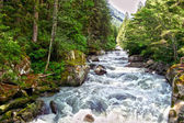Stream in South Tyrol, Italy — Stockfoto