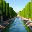 Pond surrounded by cypresses - Stock Photo