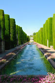 Pond surrounded by cypresses — Stock Photo