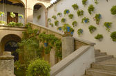 Typical Cordoba patio — Stock Photo