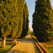 Cypress path — Stock Photo