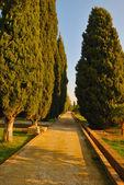 柏树路径 — 图库照片
