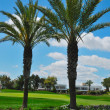 Palms golf course — Stock Photo