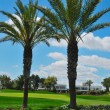 Royalty-Free Stock Photo: Palms golf course