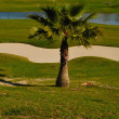 Little palm in golf course — Stock Photo