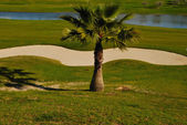 Little palm in golf course — Foto Stock