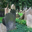 The Old Jewish Cemetery — Stock Photo