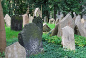 The Old Jewish Cemetery — Photo