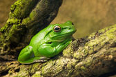 Green frog chilling in nature — Stock Photo