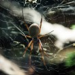 Large spider on a web — Stock Photo #35136713
