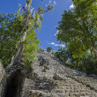 Coba. Mexico — Stock Photo #17384981