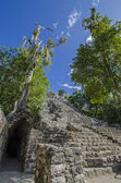Coba. Mexico — Stock Photo