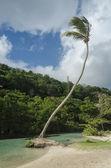 Dominican Republic. Samana — Stock Photo