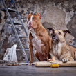Dog in the garage. repairing — 图库照片