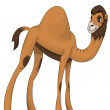Camel dromedary character cartoon style vector illustration white background isolated cut — Stock Photo