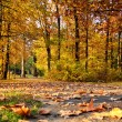 Autumn color — Stock Photo #14696819