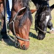 Horses graze — Stock Photo #14697279